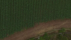 4K Aerial Drone Pasture Road Stock Footage