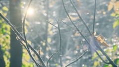 Bare tree branches in sunshine autumn morning nature scenic background Stock Footage
