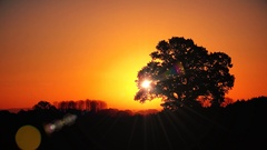 Autumn sunset with oak tree nature scenic background Stock Footage
