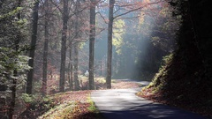 A group of young men ride their longboard skateboards downhill on a forest road Stock Footage