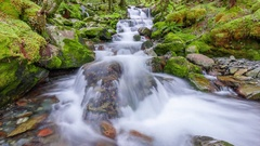 Side stream in lush bush, Nelson Lakes National Park, New Zealand Stock Footage
