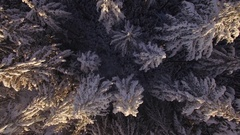 Drone Flying Low Over Tranquil Snow Covered Forest Tree Tops in Winter Season Stock Footage