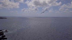 AI Bird Seagull Close Attack Aerial Stock Footage