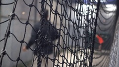 A baseball coach pitches at the batting cages. Stock Footage