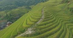 The Longji Rice Terraces Stock Footage