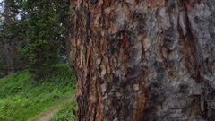 A mountain biker rides on a singletrack trail, slow motion. Stock Footage