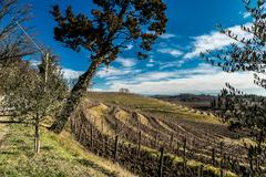 Vineyard in late winter Stock Photos