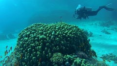Photographer swims near coral reef, Red sea, Sharm El Sheikh, Sinai Peninsula, Stock Footage