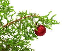 Branch of decorative home pine tree with red Christmas-tree ball Stock Photos