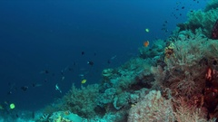 Coral reef with plenty fish 4k Stock Footage
