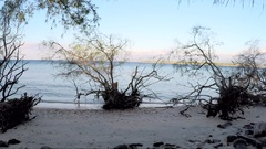 Time Lapse view of trees on sandy shore Stock Footage