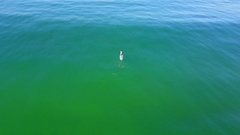 Aerial drone uav view of a SUP stand-up paddleboarder surfing. Stock Footage