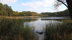 Reed on the shore of a lake in autumn. Sunny autumn day at the city lake Stock Footage