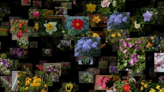 Photo stream of flowers moving OUT, seamless loop Arkistovideo