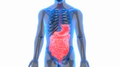 Human Digestive System Anatomy Stock Footage