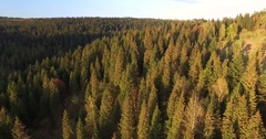Sunlit forest on the hillside. Aerial view Stock Footage