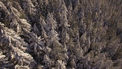 Winter Helicopter Flight Above Snow Covered Forest to Rocky Mountain Range Stock Footage