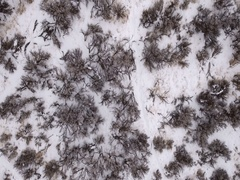 Aerial shot of a snowy mountain and sage brush after storm Stock Footage