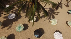Aerial palm tree and umbrellas on the beach looking down Stock Footage