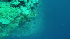 Diving in the red sea. Stock Footage