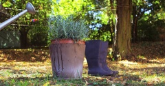 Water being poured from watering can on pot plant Stock Footage