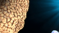 White Blood Cells Stock Footage