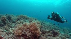 Diver on a coral reef with plenty fish 4k Stock Footage