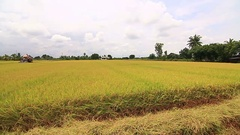 Rice field and harvesting machine Stock Footage