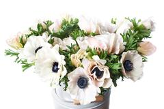 Closeup of a white poppies anemones in vase. Many flowers - light background Stock Photos