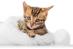 Portrait of a kitten sitting comfortably in a hat of Santa Claus on a white.. Stock Photos