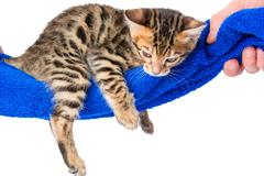 Little kitten with stripes resting in a hammock Stock Photos