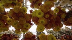 Closeup Steadicam Shot Of Dried Floral Bouquets Hanging In Market Stock Footage