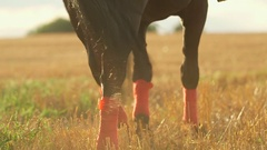 Woman riding horse on field during sunset Stock Footage