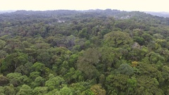 Descending to the canopy of tropical rainforest in the Ecuadorian Amazon Stock Footage