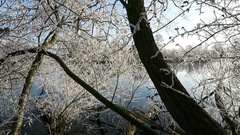 Rime frost crystals on landscape at Havel river (Havelland,  Germany) Stock Footage