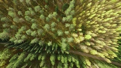 Vertical aerial shot of different trees in an arboretum forest in Punkaharju Stock Footage