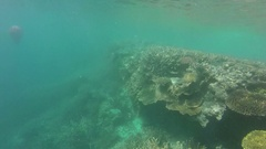 Great Barrier Reef, Corals Under Water, buoy Stock Footage