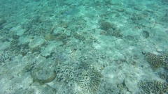 Great Barrier Reef, Corals Under Water Stock Footage