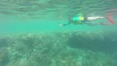 Great Barrier Reef, Tourist Snorkeling Under Water Stock Footage