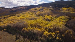 4k aerial drone footage of yellow Fall Autumn Aspen leaves.  Colorado Mountains Stock Footage