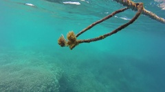 Great Barrier Reef, Old rope Floating Under Water Stock Footage