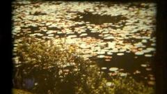 Sri Lanka 1986 water lilies Stock Footage