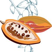 Cacao fruits, Cocoa - raw fruit to making chocolate Stock Illustration