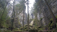 Tall lush green trees in forest, huge rock formations, Germany Stock Footage