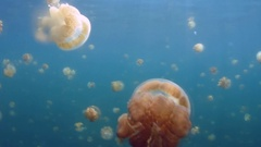 Accumulation of jellyfish underwater Stock Footage