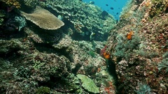 Indonesia Underwater World Reef Fish Slowmotion Stock Footage