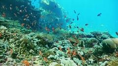 Underwater Reef Fish Indonesia Slowmotion Stock Footage