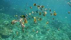 Indonesian Coral Reef Fish Underwater Colorful Slowmotion Stock Footage
