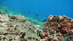 Coral Reef Underwater Fish Snrkeling Indonesia Slowmotion Stock Footage