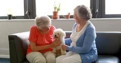 Senior women pampering dog Stock Footage
